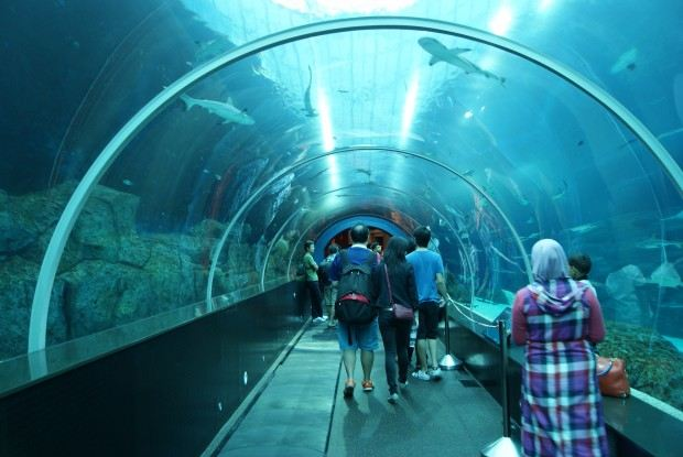 Shark_Seas_S.E.A._Aquarium_Marine_Life_Park_Resorts_World_Sentosa_Singapore_-_20130105-02-620x415