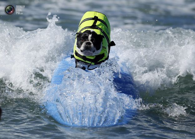 surfing_dogs_002