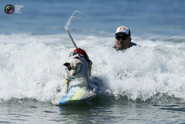 surfing_dogs_004