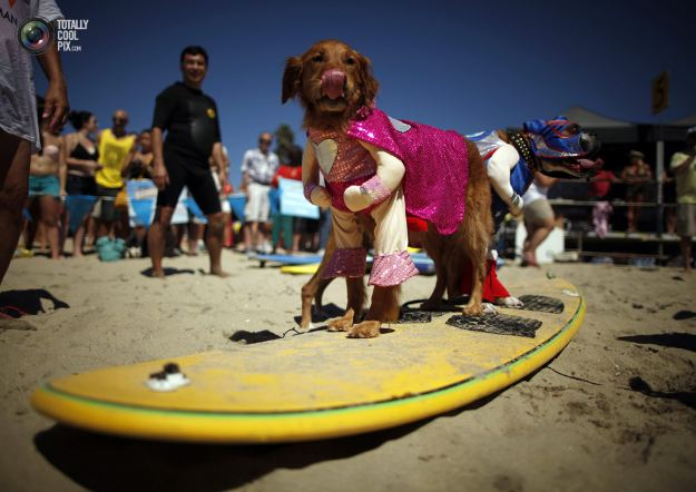 surfing_dogs_005