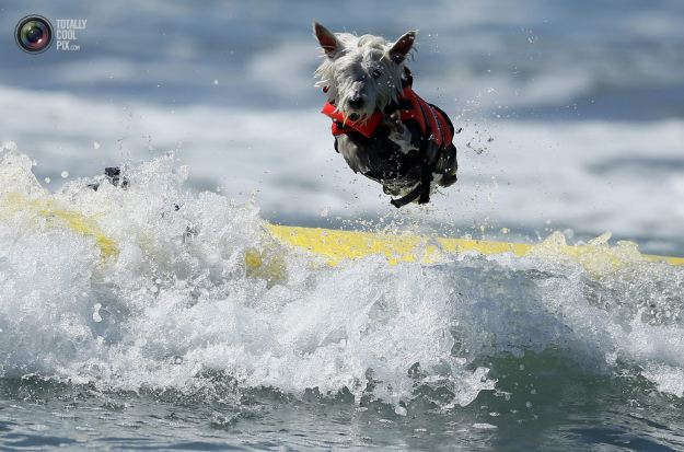 surfing_dogs_007