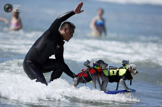 surfing_dogs_008