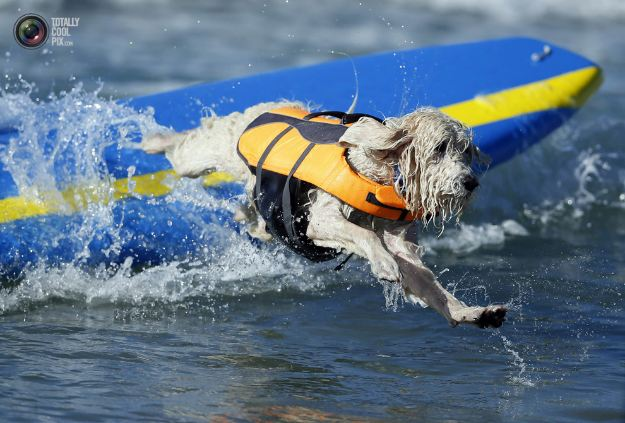 surfing_dogs_009