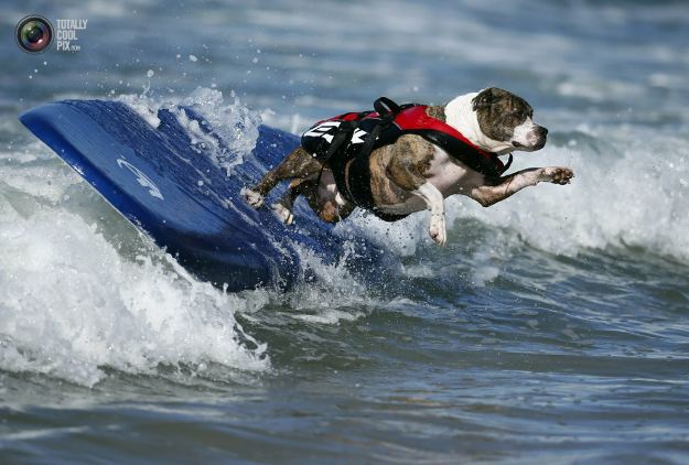 surfing_dogs_010