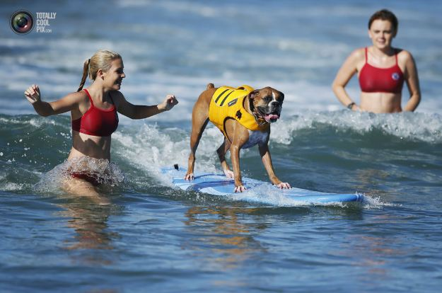 surfing_dogs_011