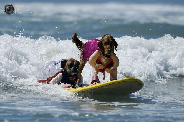 surfing_dogs_012