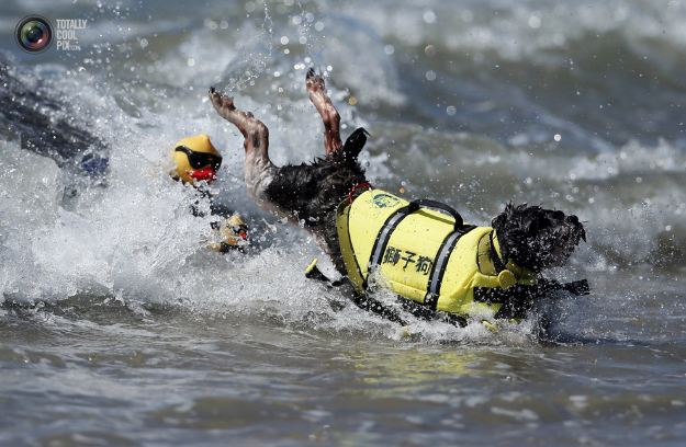 surfing_dogs_013