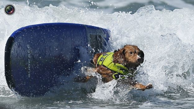 surfing_dogs_014