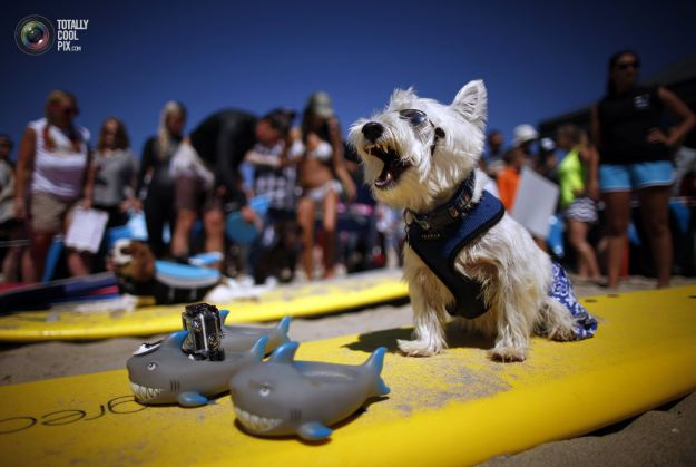 surfing_dogs_016