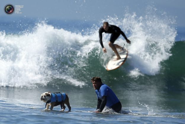 surfing_dogs_017