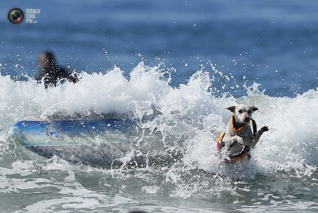 surfing_dogs_019