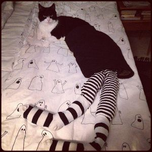 cat-in-tights