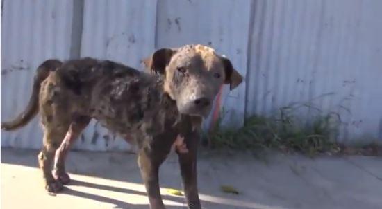 Собачка с улицы или сказка из реальной жизни… Берегите животных
