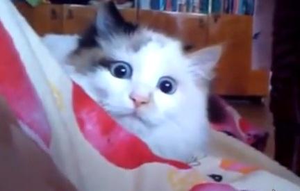 Классная подборка кошачих приколов. Как будто про вашего кота сняли видео :)