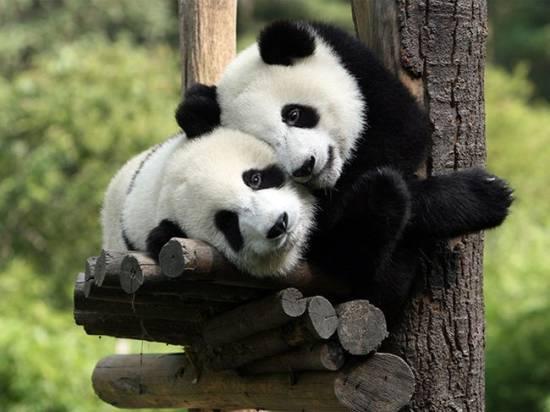 Любовь в мире животных. Замечательная и милая коллекция фоток.