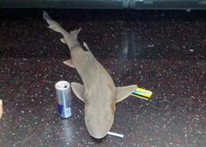 В метро Нью-Йорка найдена мертвая акула
