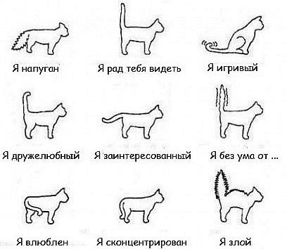 Учим кошачий язык