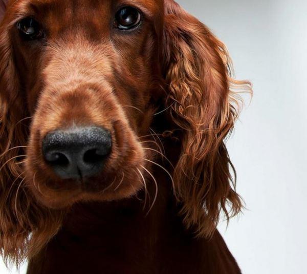 Собаки. Очаровательные фото собак.