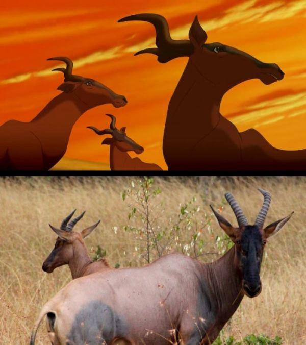 Мультфильм «Король Лев» в реальности