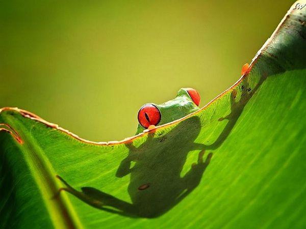 Красивые лягушки в необычных ситуациях