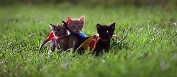 Котята-супергерои сразились с собаками-рэперами