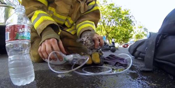 Как пожарники котенка спасали