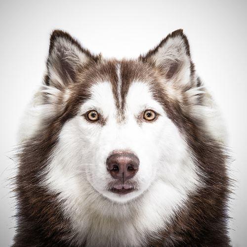 5 генетических мутаций, благодаря которым собаки стали лучшими друзьями человека