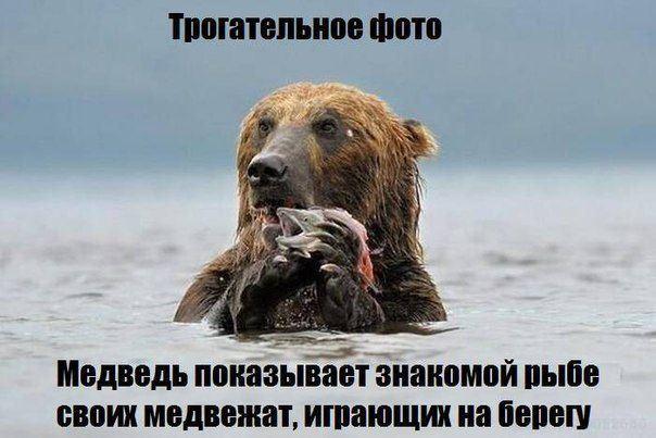 Юмор про животных в картинках