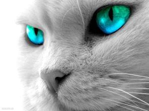 Как видят мир люди и кошки.