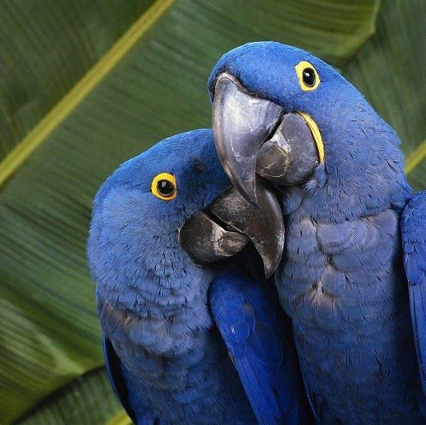 Попугаи дают имена своим детям
