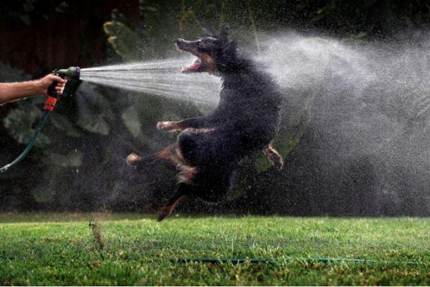 Лучшие фотожурналисты года по мнению австралийского фонда Уолкли и компании Nikon.