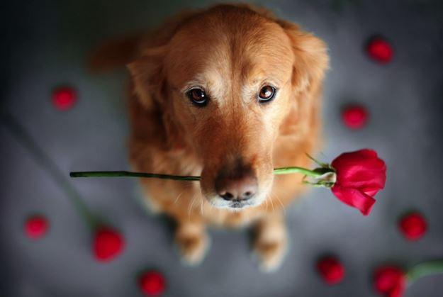Счастливые собаки от Джессики Трин