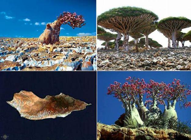 Фантастическая природа острова Сокотра