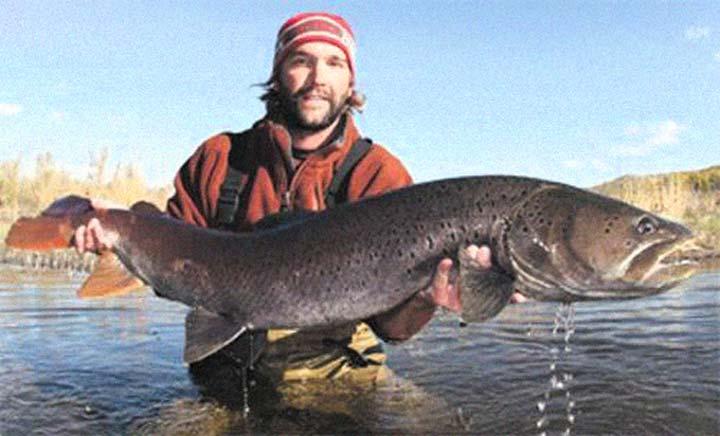 Топ-10 Самые большие пресноводные рыбы в мире.