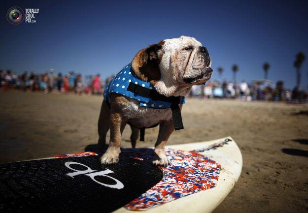 Собачки-серфингисты