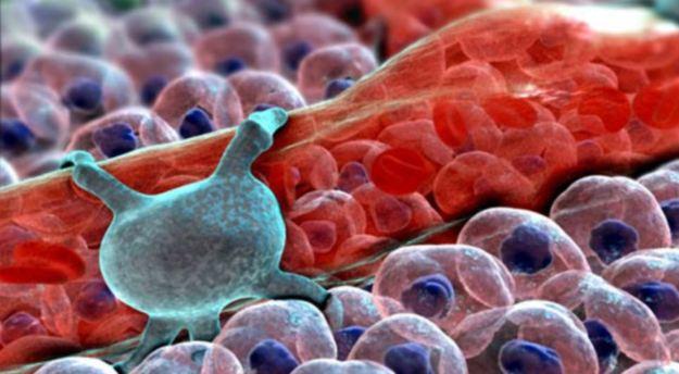 Фантастический мир человеческого тела или как мы выглядим в микроскопическом смысле