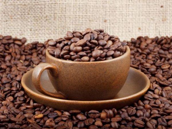 Самый дорогой кофе в мире «Черный кот». Сделано слонами