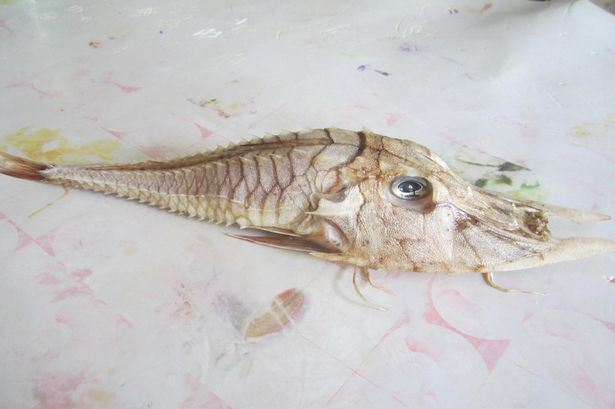 У берегов острова Борнео рыбак выловил ранее неизвестную науке рыбу.