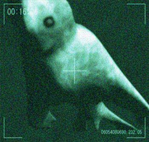 В Антарктике обнаружили загадочного гигантского гуманоида.