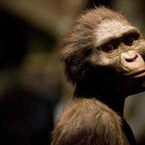 5 предков человека, заставивших ученых поломать голову