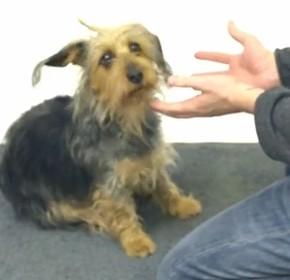 Как собаки реагируют на магию
