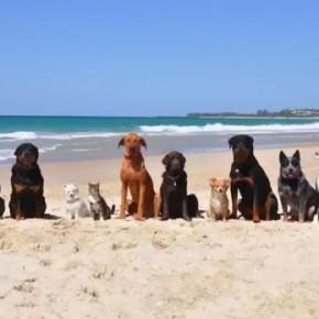 """12 собак и кот танцуют под песню Фаррелла Уильямса """"HAPPY"""". (Видео)"""