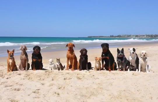 12 собак и кот танцуют под песню Фаррелла Уильямса «HAPPY». (Видео)