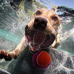 4 полезных трюка, которым можно обучить собаку.