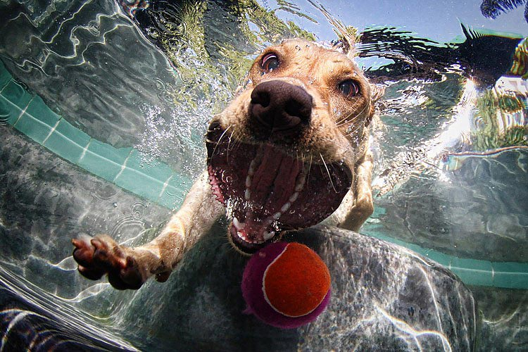 4 полезных команды, которым можно обучить вашу собаку.