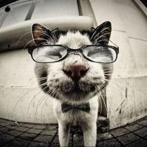 Как понимать животных: приложение для мобильника, которое позволит вам понимать вашу кошку или собаку.