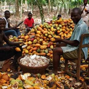 Фермеры Респу́блики Кот-д'Ивуа́р собирающие всю жизнь какао-бобы, впервые попробовали шоколад.
