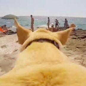 Собачья радость: эта собака очень любит купаться.