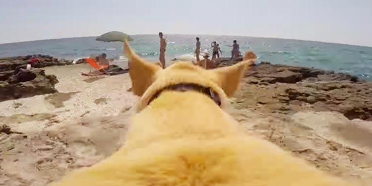 Собачья радость: эта собачка очень любит купаться.