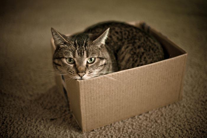 Кошачья логика — отличный кошачий видео-прикол.